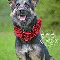 Adopt A Pet :: Regina - Fort Valley, GA