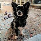 Adopt A Pet :: Tonks