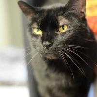 Adopt A Pet :: Kierra - New Freedom, PA