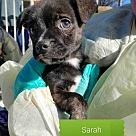 Adopt A Pet :: Sarah