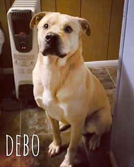 Adopt A Pet :: Debo  - Mobile, AL