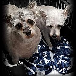 Puppies for Sale in Champaign Illinois - Adoptapet com