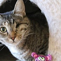Adopt A Pet :: Seraphina - Lancaster, CA