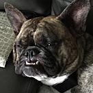 Adopt A Pet :: Freya
