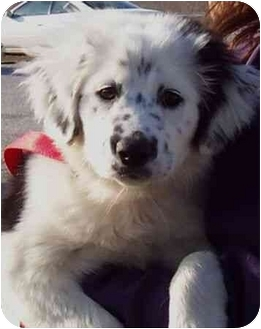 Winfield Ks Border Collie Meet Tessie A Pet For Adoption