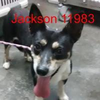 Adopt A Pet :: Jackson - Manassas, VA