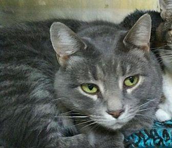 Adopt A Pet :: Cruze  - Mt Vernon, IN