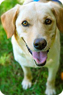 Labrador Retriever Mix Dog for adoption in Marietta, Georgia - Piper