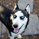 Adopt A Pet :: Pesah