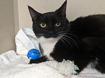 Adopt A Pet :: Billie  - Laramie, WY