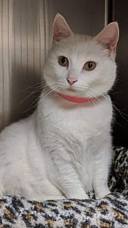 Adopt A Pet :: Alice  - Northwood, NH