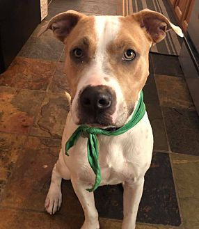 Adopt A Pet :: Smitty  - Oklahoma City, OK