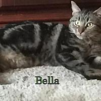 Adopt A Pet :: Bella - Weatherford, OK