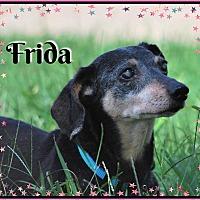 Adopt A Pet :: Frida - Green Cove Springs, FL