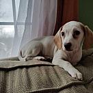 Adopt A Pet :: Liz Claiborne