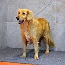 Adopt A Pet :: Fallon