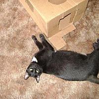 Adopt A Pet :: Jaxon - Parlier, CA