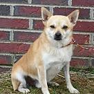 Adopt A Pet :: Duke (14 lb)