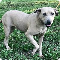 Adopt A Pet :: Sadie - Starkville, MS