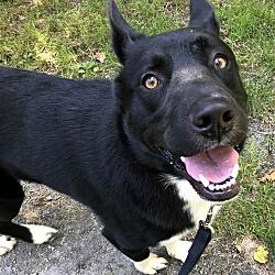 Puppies for Sale in Abbotsford British Columbia - Adoptapet com