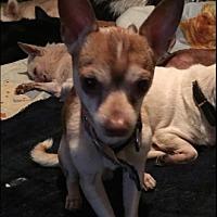Adopt A Pet :: Prince - Brooksville, FL