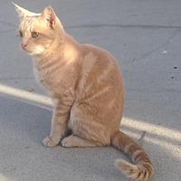 Adopt A Pet :: Holly - Long Beach, CA