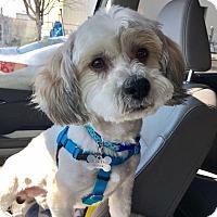 Adopt A Pet :: Eddie - Newtown, CT