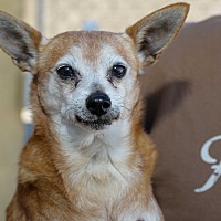 Adopt A Pet :: Sir Lancelot and Guinevere - Corona, CA