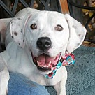 Adopt A Pet :: Reese-UPDATE 12/10