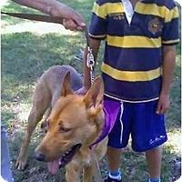 Adopt A Pet :: Oso - Riverside, CA