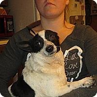 Adopt A Pet :: Oliver - Greenville, RI