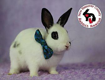 Adopt A Pet :: Jaxson  - Wilmington, NC