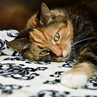 Adopt A Pet :: JENSON - Johnstown, PA