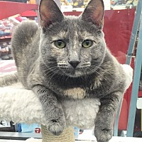 Adopt A Pet :: Michelle - Lutherville, MD