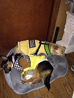 Adopt A Pet :: Dawn & Fawn  - Renton, WA