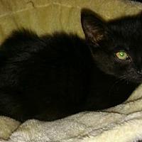 Adopt A Pet :: Lucky - Oviedo, FL