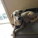 Adopt A Pet :: Tito