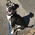 Adopt A Pet :: Slim Charles