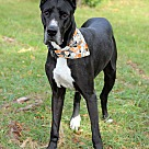 Adopt A Pet :: Alicia