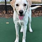 Adopt A Pet :: Vern