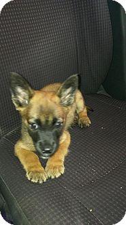 Retriever (Unknown Type) Mix Puppy for adoption in Walden, New York - Prince