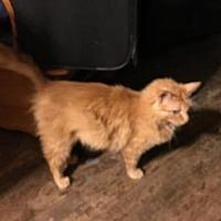 Adopt A Pet :: 3903 Pumpkin - RR - Council Bluffs, IA
