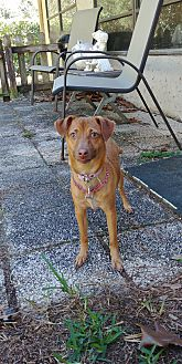 Adopt A Pet :: Lilly  - Floral City, FL