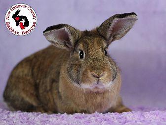 Adopt A Pet :: Raspberry  - Wilmington, NC