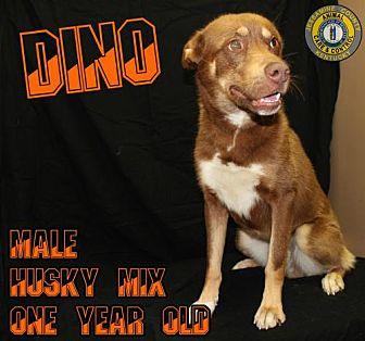 Adopt A Pet :: Dino  - Nicholasville, KY