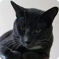 Adopt A Pet :: George - Incline Village, NV