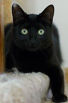Adopt A Pet :: Mia  - Troy, MI