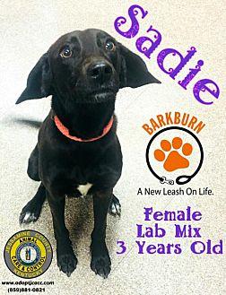 Adopt A Pet :: Sadie  - Nicholasville, KY