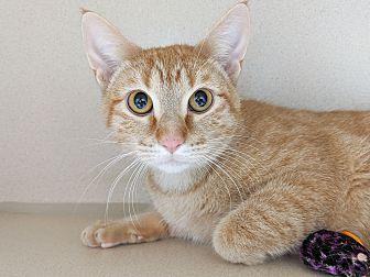 Adopt A Pet :: Ronnie  - Laramie, WY