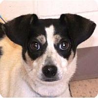 Adopt A Pet :: Flash - Snellville, GA